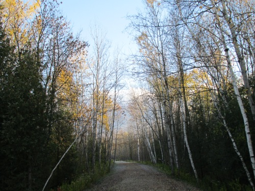Trail in Late Fall